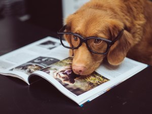 Dog reading a book with glasses on.
