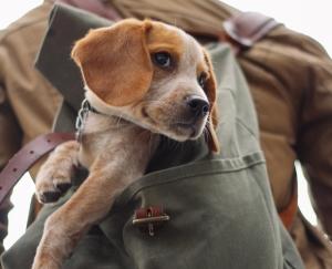 Dog in knapsack